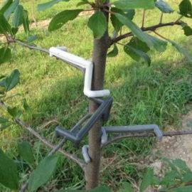 Formiranje krošnje voćaka