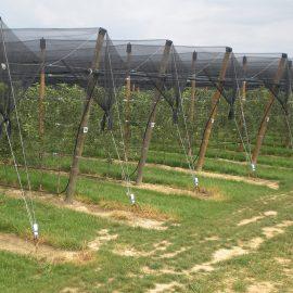Protivgradne mreže u voćarstvu