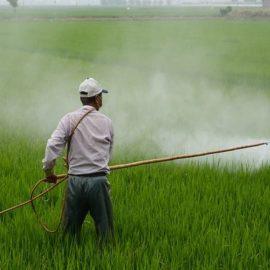 Švajcarska odlučuje o izbacivanju pesticida