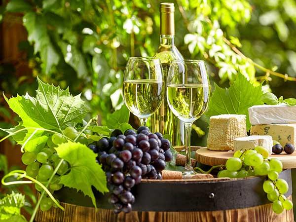 vina i loza